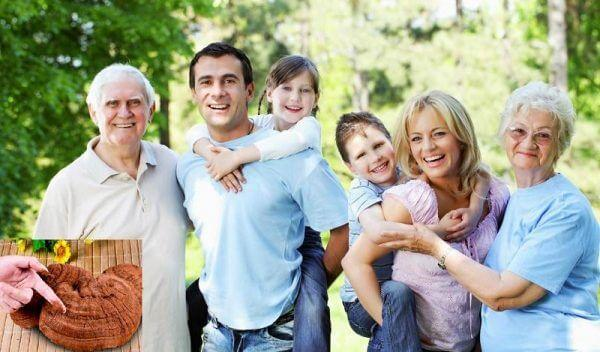 Chú ý chọn nấm Linh Chi chất lượng để phát huy công dụng đối với sức khỏe
